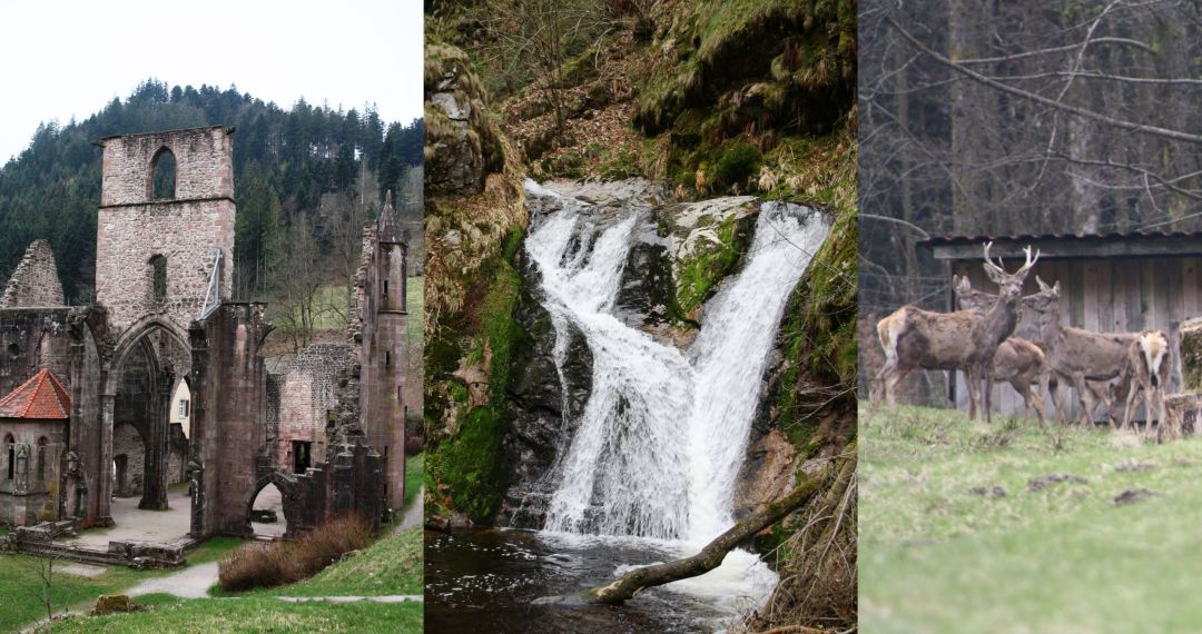 Klosterruinne, Waterfall, Deer