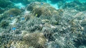 Snorkeling Kanawa Island Indonesia