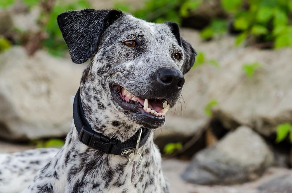 Hund_Luna-7749-2