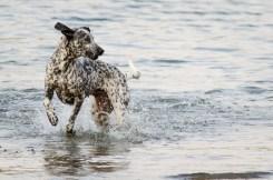 Hund_Luna-7816-2