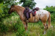 Pferd_Jammin-7059