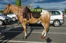 Pferd-7975