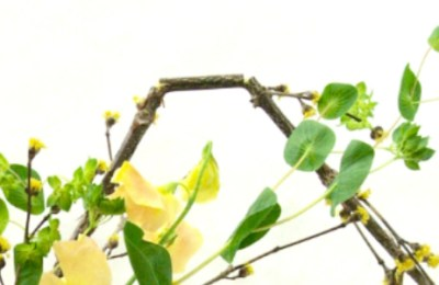 Shapes: An Important Factor in Ikebana
