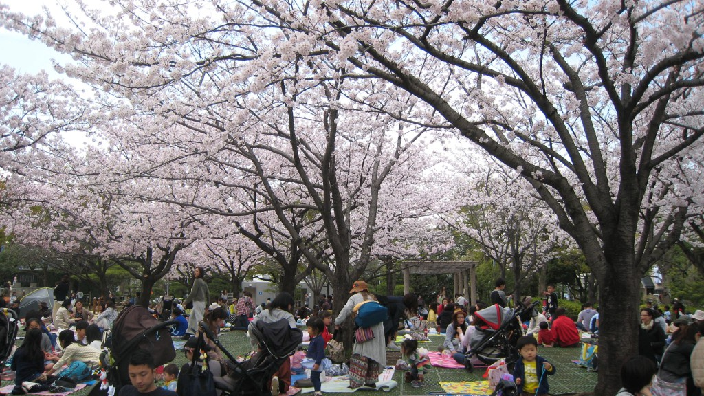 Sakura Viewing in Gyosen Park