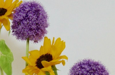 Alliums and Sunflowers: Signs of Summer