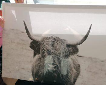 Kuh Bild