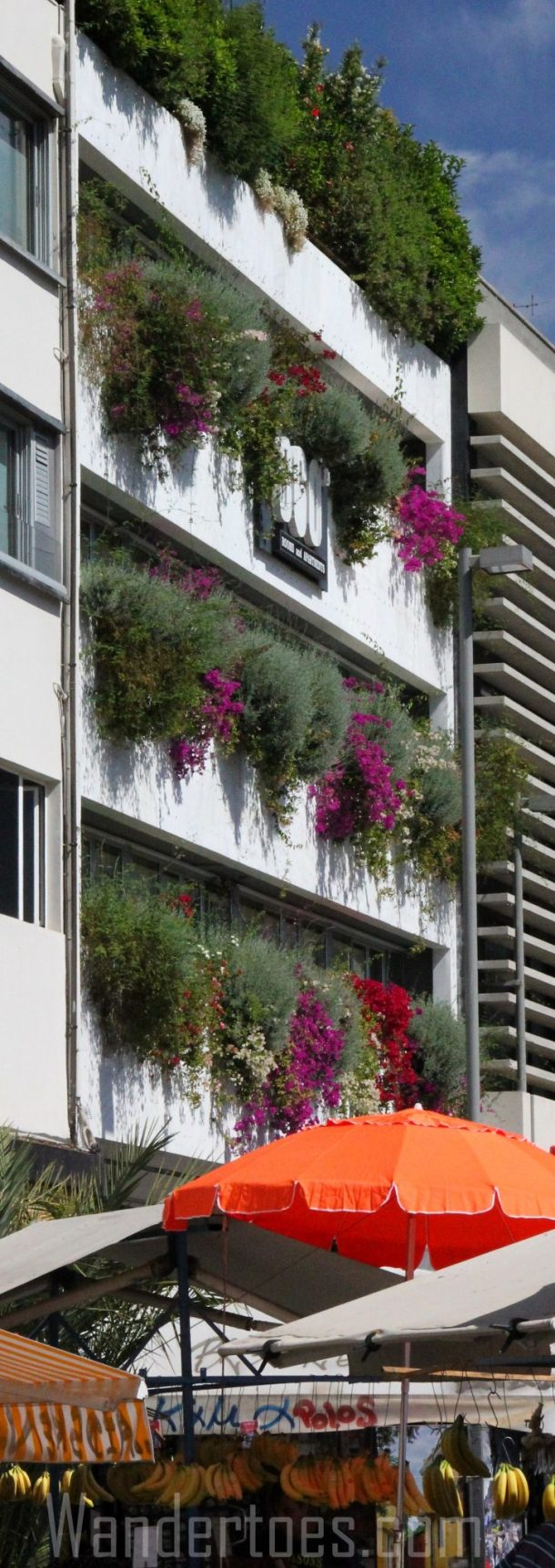Athens Flower Front Building Wandertoes