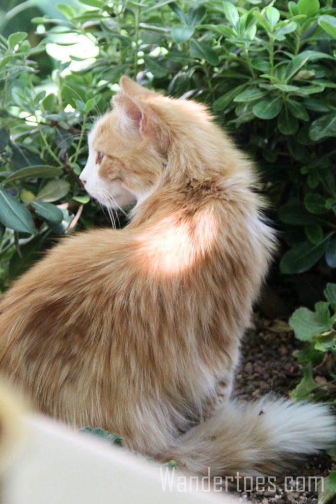 Diogenes Cat 1 Wandertoes