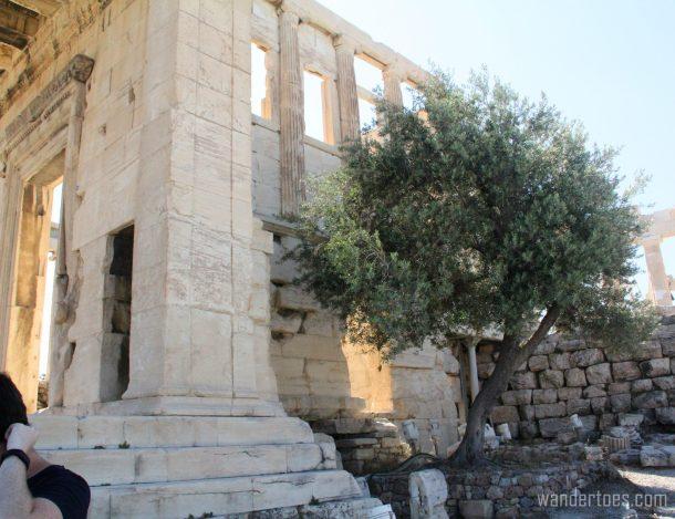 olive-tree-wandertoes