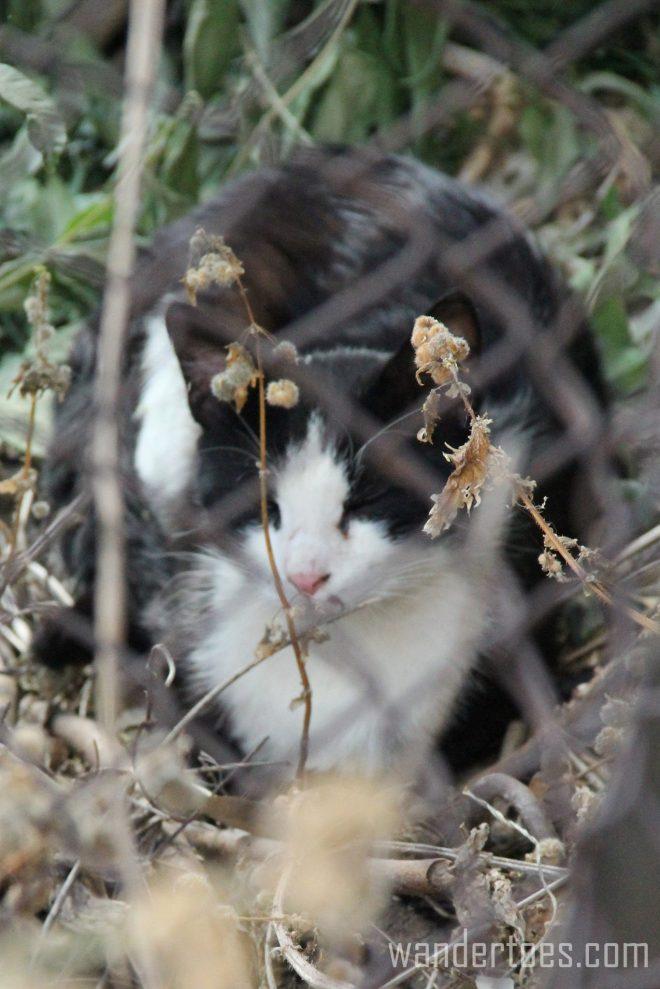 Plaka Cat 4 Wandertoes