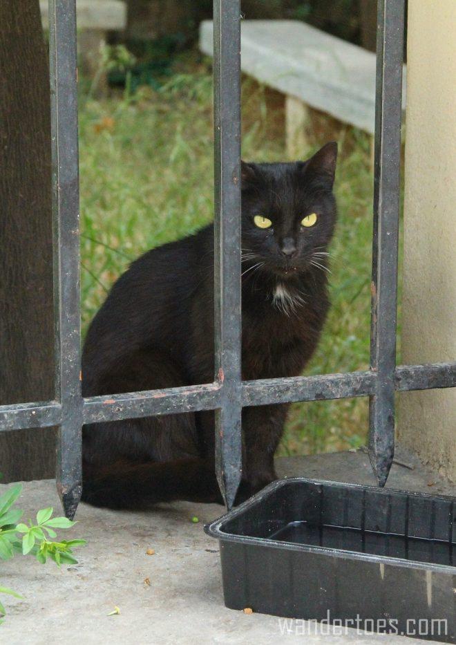 Plaka Cat 5 Wandertoes