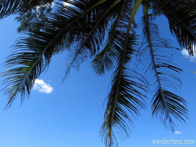 beach-day4