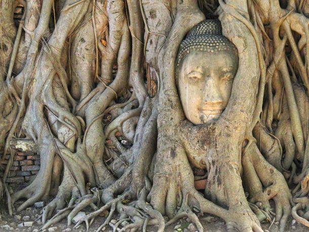 Ayutthaya Thailand Bangkok day trip travel with kids buddha head