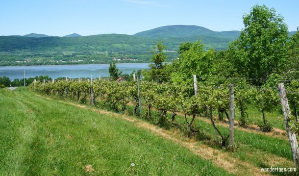 Day Trips from Quebec City | Quebec City Wineries | Quebec Vineyards | Quebec City Food Tour | Ile d'Orleans Food Tour