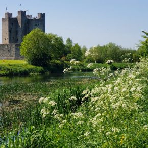 How To Accidentally Visit Ireland's Trim Castle River Walk and Ruins