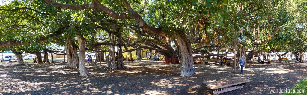 Things to do in Lahaina Maui, What to do in Lahaina, Things to do in Maui with Kids
