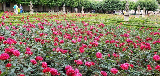 Bamberg Neue Residenz Rose Garden, Bamberg New Residence Rose Garden