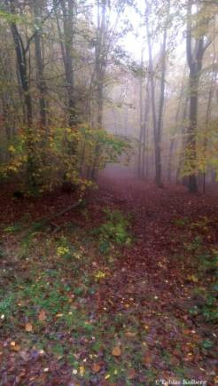 Wandern_20141103_Baumgeistertour_Rundweg_Tobias_020
