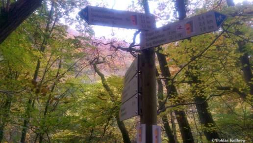 Wandern_20141103_Baumgeistertour_Rundweg_Tobias_077