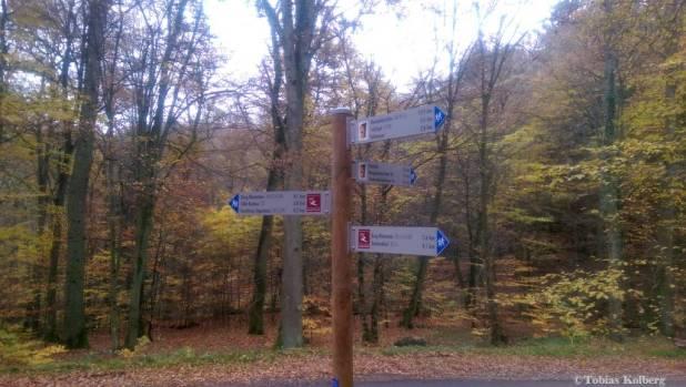 Wandern_20141103_Baumgeistertour_Rundweg_Tobias_100
