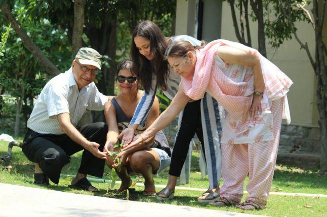 sapling plantation
