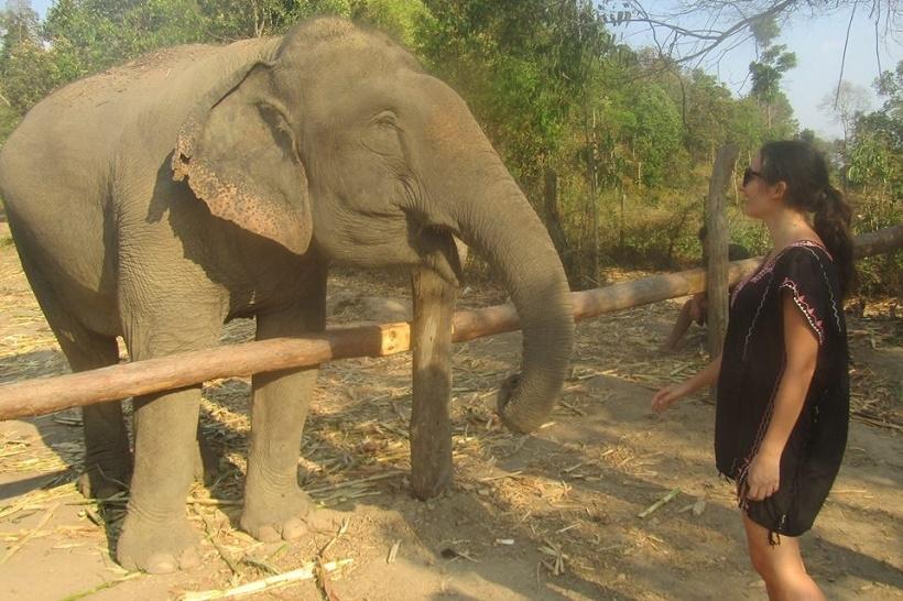 Elephants ethical