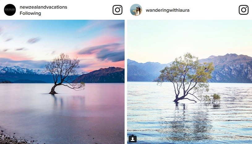 Instagrammable travel Wanaka tree