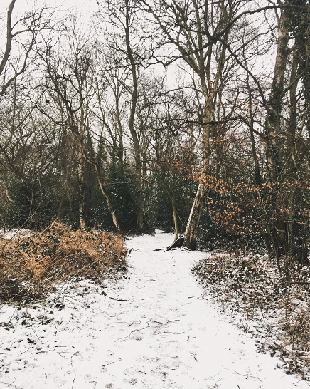Snowy woods - being left behind