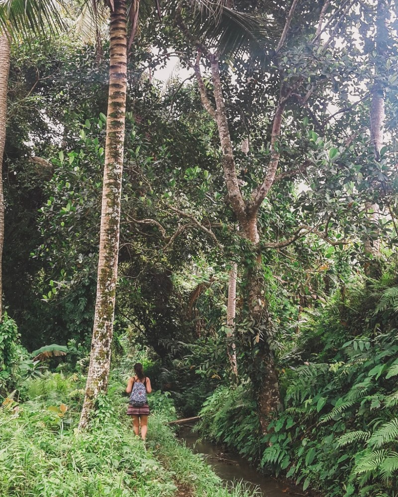 Bali jungle walk