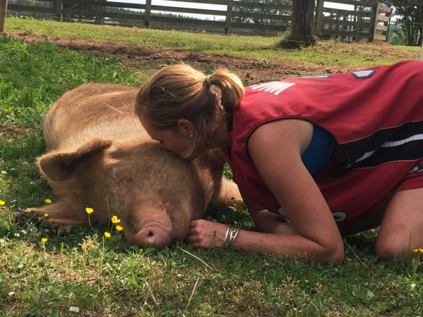 woman kissing large pig on the face.