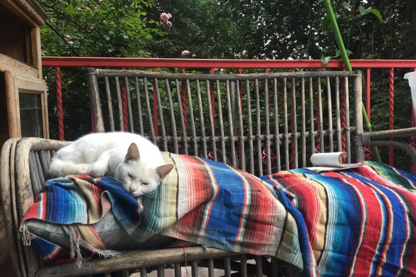 a white cat taking a nap on a colorful blanket