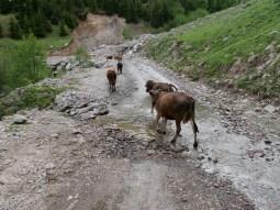 Durch den Bach braust man am besten ohne anhalten durch, sonst gibts nasse Füsse, wie bei den Damen im Bild.