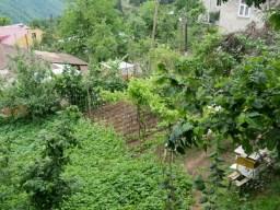 Der Garten, aus dem die Leckereien bei Roi kommen.