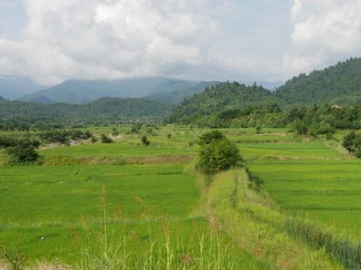 A 1000 rice fields.