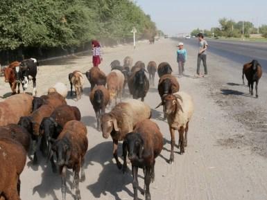 Sheep flock with children in vacation. Hopefully.// Schafsherde mit Kindern, die gerade Ferien haben. Hoffentlich.
