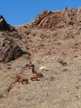 Pferdeherde.// Horse herd.