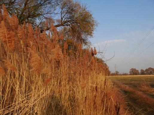 Kasakh autumn.//Herbst in Kasachstan.