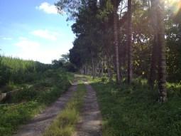 In the south of Yogya.