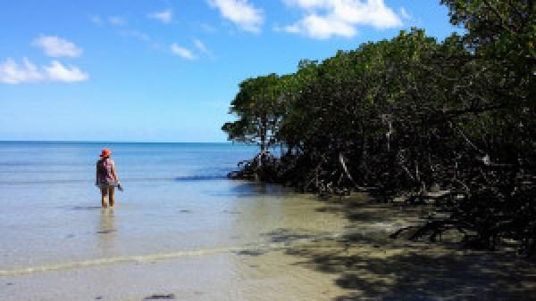 Mangrove-Daintree-National-Park