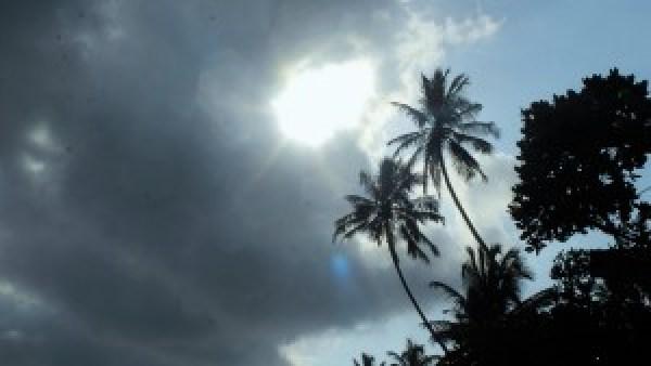 Palmbomen Sri Lanka