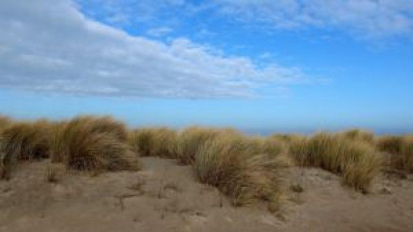 Duinen waddeneiland Vlieland