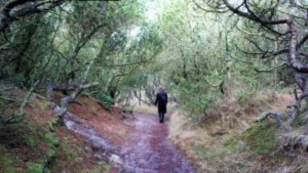 Wandeling bos Vlieland