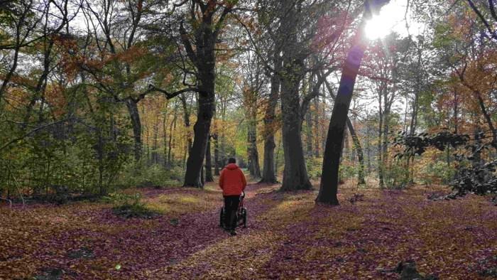 Trekvogelpad etappe 8 herfstzon in bos