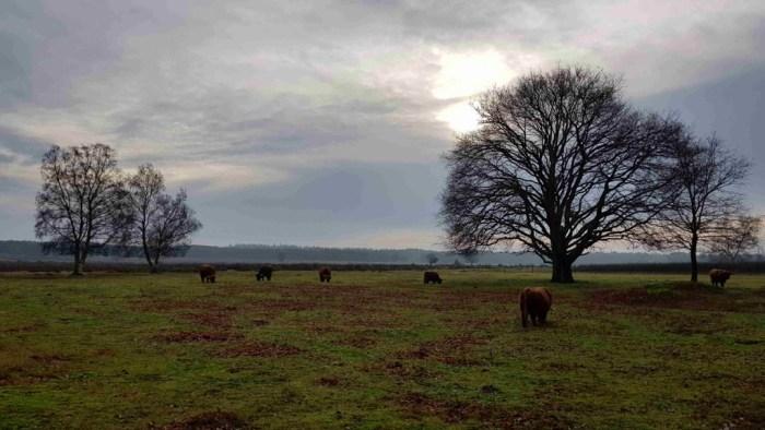 Trekvogelpad etappe 9 Westerheide Hilversum