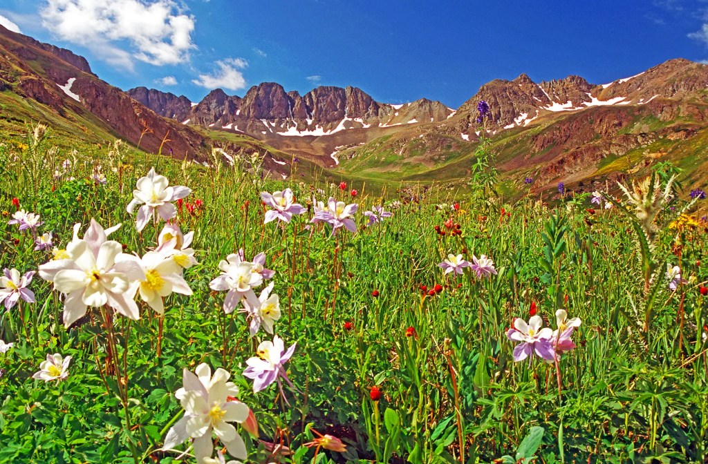 Mountains and wildflowers of American Basin, Colorado