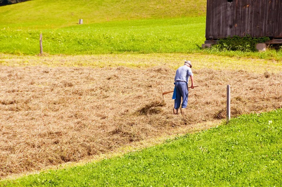 Man working in the field near Castelrotto/Kastelruth, Italy