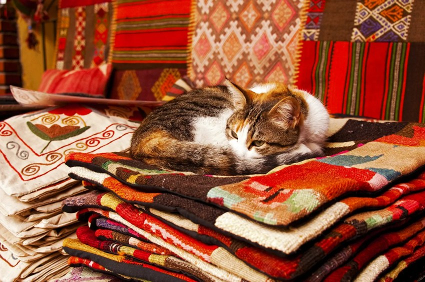 Cat lounging on a pile of woven blankets, Istanbul, Turkey