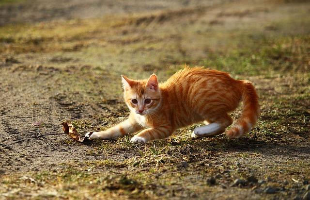 chat énergique