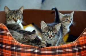 chatons et maman chat