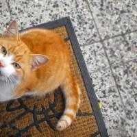 Mon chat miaule sans cesse : que faire pour l'arrêter et le calmer ?